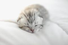 Cute tabby kittens lying. Cute tabby kitten sleeping on bed Stock Image