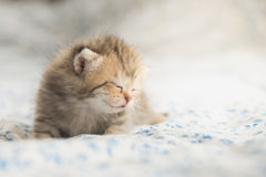 Cute tabby kittens sleeping Stock Photography