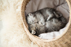 Cute tabby kittens sleeping and hugging. In a basket Stock Photos
