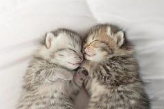 Cute tabby kittens sleeping and hugging Royalty Free Stock Photos