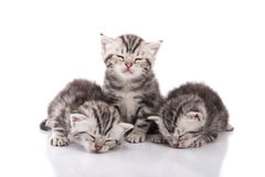 Cute tabby kittens sleeping on white background Stock Photos