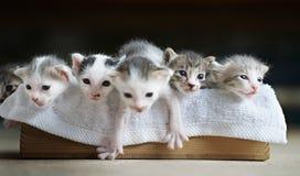 Tabby kittens in wooden box. Cute tabby kittens  in wooden box Stock Photos