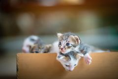 Tabby kittens in wooden box. Cute tabby kittens  in wooden box Stock Photography