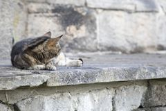 Tabby Cat. A cute tabby laying on a wall stock photos