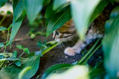Cute tabby little kitten in the grass royalty free stock photos