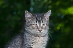 Cute tabby outdoor kitten with green background Stock Photos
