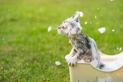 Cute tabby taking a bath Stock Photography