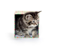 Cute taby kitten in box Stock Photo
