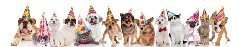 Cute team of pets with colorful hats ready for party. Cute team of cats and dogs with colorful hats ready for birthday party while standing, sitting and lying on stock photos