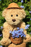 Cute teddy. Holding basket of forget me Stock Image