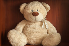 Cute Teddy Bear Stock Image