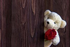 Cute teddy bear clutching a red rose in its arms on wooden background, copy space. Valentine Concept Royalty Free Stock Images