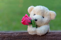 Cute teddy bear clutching a red rose in its arms on wooden background, copy space. Valentine Concept stock photos