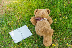 A cute teddy bear. A cute teddy bear lying on grass  and notebook to fill Royalty Free Stock Photos