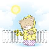 Cute teddy bear in a raincoat and rubber boots holding a bouquet of daffodils. Vector illustration for a card or poster. Spring and warm Stock Photography