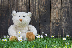 Cute teddy bear sitting alone in the green with old wooden backg Stock Photography