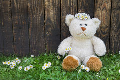 Cute teddy bear sitting alone in the green with old wooden backg Royalty Free Stock Image