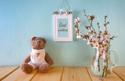 cute teddy bear sitting next to spring cherry tree Royalty Free Stock Photos