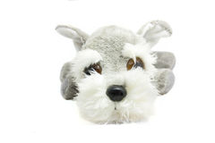 Cute terrier fluffy toy dog Royalty Free Stock Image