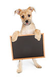 Cute Terrier Puppy Holding Blank Chalk Board Royalty Free Stock Photos