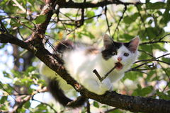 Cute three colored kitten gnawing on tree branch Royalty Free Stock Photography