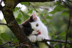 Cute three colored kitten gnawing on tree branch Stock Images