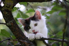 Cute three colored kitten gnawing on tree branch Royalty Free Stock Images