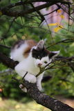 Cute three colored kitten gnawing on tree branch Stock Image