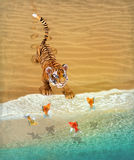Cute tiger cub playing with goldfish. Royalty Free Stock Image