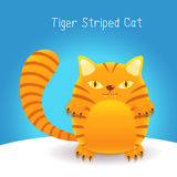 Cute tiger stripes cat Stock Photo