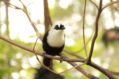 Cute tiny bird hanging on a tree Royalty Free Stock Photo