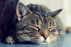 Cute tired cat sleeping, portrait detail. Stock Image