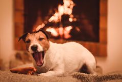 Cute tired sleepy dog lying in front of fireplace yawning royalty free stock photo