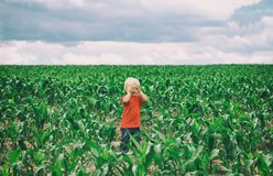 Cute toddler blond boy stands on the field with his eyes closed with his hands. Game of hide. Find me stock photos