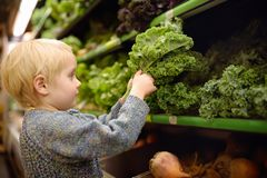 Cute toddler boy in a food store or a supermarket choosing fresh organic kale salad royalty free stock image