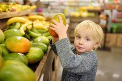 Cute toddler boy in a food store or a supermarket choosing fresh organic mango royalty free stock photography