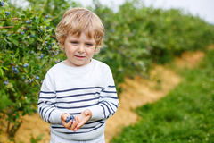 Cute toddler boy helping to pick blueberries. On organic berry farm, outdoors Royalty Free Stock Photos