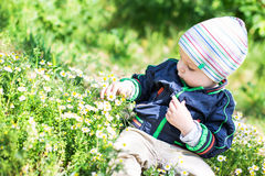 Cute toddler boy  look at daisy Stock Photography