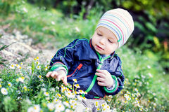 Cute toddler boy look at flowers Royalty Free Stock Photo