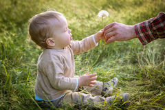 Cute Toddler boy looks at the nature Royalty Free Stock Photography