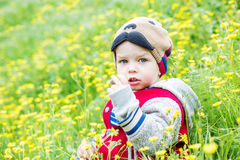 Cute toddler boy plucks flowers Stock Images