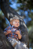 Cute toddler boy sitting on a tree Royalty Free Stock Images