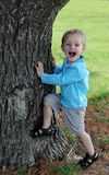 Cute toddler Boy trying to climb a tree stock photo