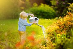 Cute toddler boy watering plants in the garden at summer sunny day. Mommy little helper royalty free stock image