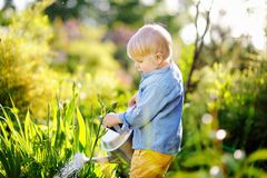 Cute toddler boy watering plants in the garden at summer sunny day. Mommy little helper royalty free stock images
