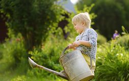 Cute toddler boy watering plants in the garden at summer sunny day stock image
