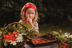 Cute toddler girl in autumn garden making rowan berry beads Royalty Free Stock Photo