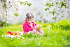 Cute toddler girl eating apple in blooming apple garden Royalty Free Stock Image