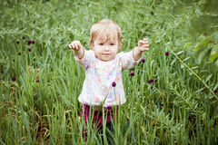 Cute Toddler Girl in the grass Stock Images