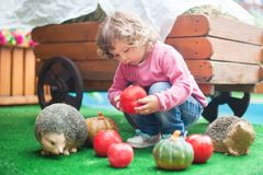 Cute toddler girl playing with toy hedgehog. Adorable toddler girl playing with toy hedgehog indoors, feeding wild animal with apple. Kid playing developing Stock Photo